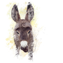 Baby Donkey Mule Watercolor