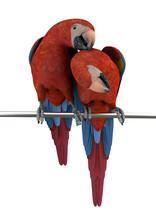 Papageien-Paar, Rot-blau, 3D-R...