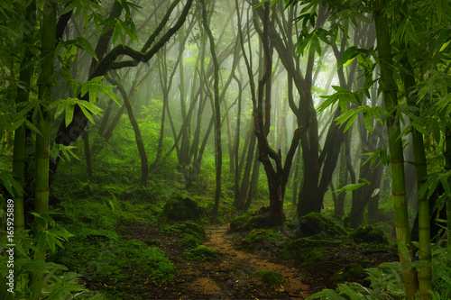 Cadres-photo bureau Bambou Tropical jungle