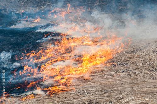 Foto op Aluminium Vulkaan Forest fire. Smoke and flame