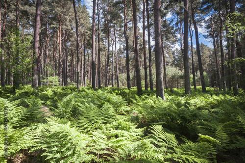 Roseisle Forest near Burghead, Moray, Scotland Canvas-taulu
