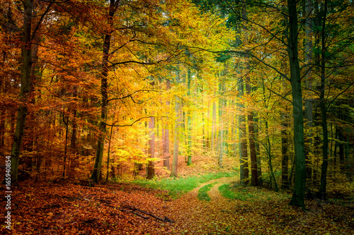 Deurstickers Herfst Gold and green path in the forest in Poland
