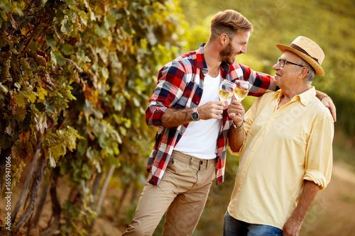 Fotografía  father and son vintner harvest wine in vineyard.