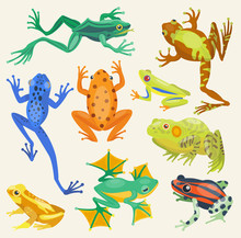 Frog Cartoon Tropical Animals Vector Illustration Isolated Nature