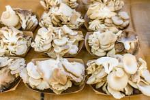 Freshly Harvested Mushrooms At Market