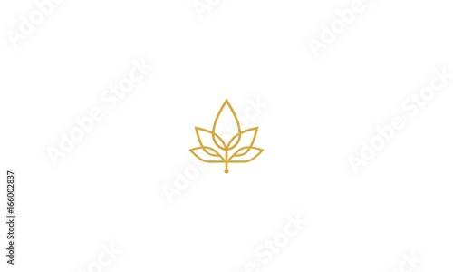 Fotografie, Obraz  maple, leaf, cannabis, luxury, emblem symbol icon vector logo