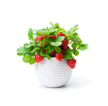 Strawberry  Plant With Berries...