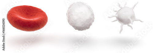 Pinturas sobre lienzo  blood cells isolated on white background
