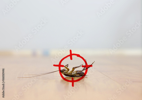drawing of gun target to kill cockroach , pest control concept
