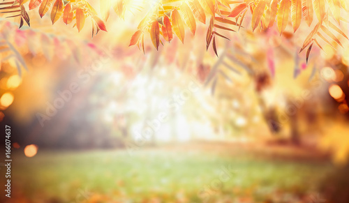 Poster Melon Autumn nature background with colorful fall foliage, pasture and sunbeams