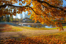 Bright Colorful View Of Fall F...