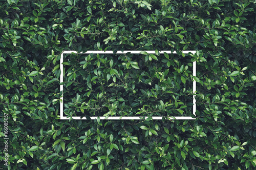 Fotobehang Planten Creative layout with white frame on nature. Flat lay