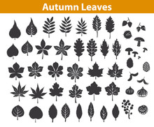 Autumn Fall Leaves Silhouettes Set In Black Color, Maple Chestnut Ash Oak Birch Gum Beech Walnut Rowan Elm Trees Foliage. Leafs Are Included As Art Brushes In Library