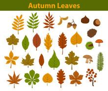 Autumn Fall Colorful Leaves Co...