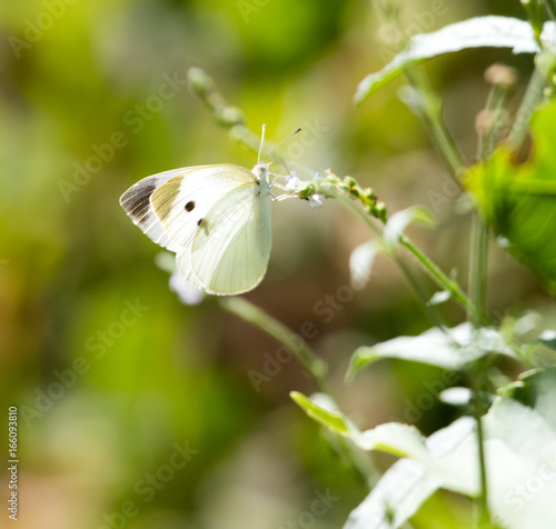 White butterfly on a plant in nature Canvas Print