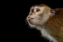 Close-up Portrait Of Funny Lon...