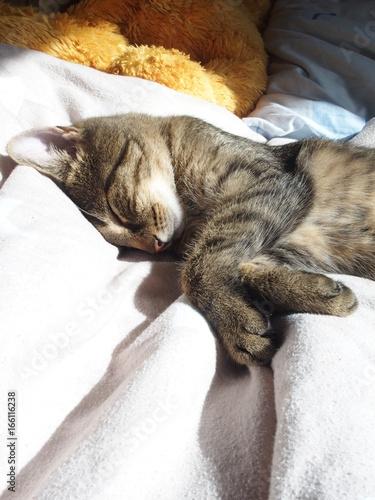 Katze schlafend auf einem Bett Obraz na płótnie