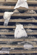 Salted Cod Dried On Wooden Racks