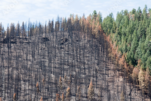 Damage from the Lightner Creek wildfire in Durango, Colorado Wallpaper Mural