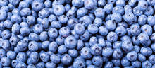 Fresh Blueberries As Background