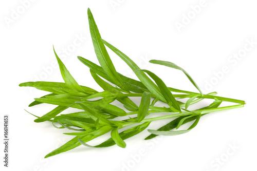 Fotografia  tarragon isolated on a white background. Artemisia dracunculus