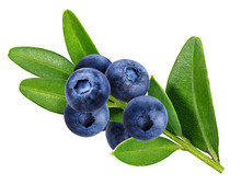 Bilberry, Blueberries Isolated On White