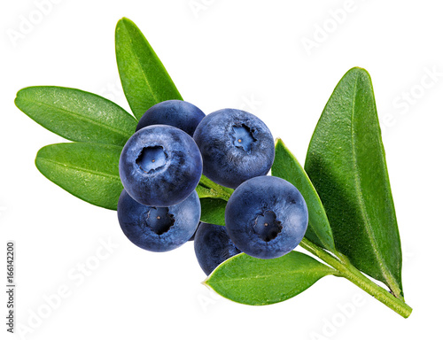 bilberry, blueberries isolated on white Canvas Print