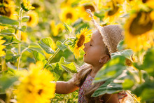 Beautiful Little Girl In Sunfl...