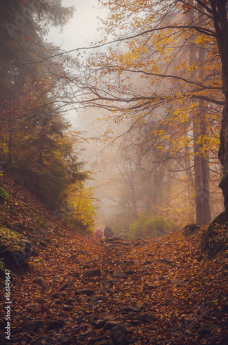 Fototapety, obrazy: Road through a golden foggy forest