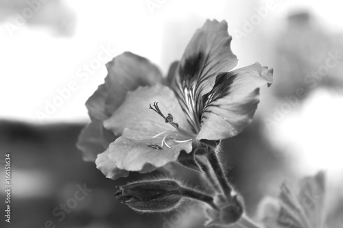 flores desenfoque