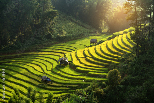 Foto auf Leinwand Reisfelder Vietnam beautiful landscape rice terrace view in wild