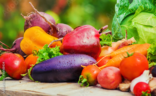 Fototapeta Different vegetables. Selective focus.  obraz na płótnie
