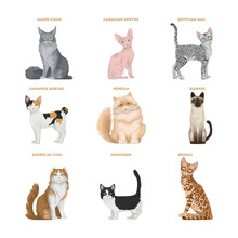 Cat Breeds Set.