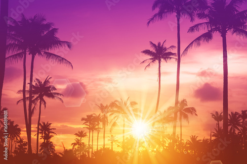 In de dag Candy roze Copy space of tropical palm tree with sun light on sky background.