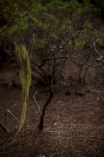 Dry Branches In The Jungle. Fairytale Forest