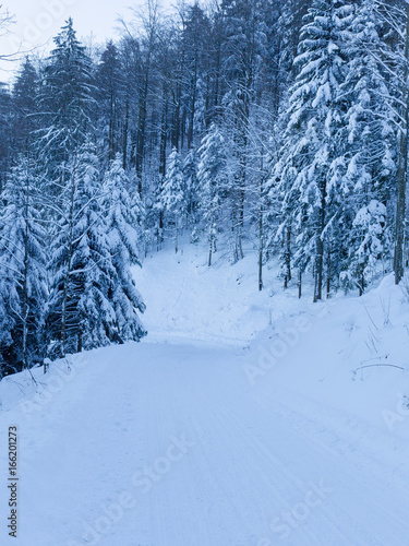 Poster Fleur Winter landscape with a blue tint. Mountains of Switzerland with snow and pine trees.