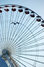 Chicago Ferris Wheel And A Bird