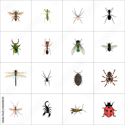 Photo Realistic Spinner, Wasp, Ant And Other Vector Elements