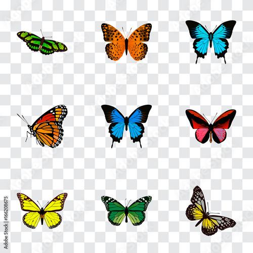 Fotografie, Obraz  Realistic Danaus Plexippus, Birdwing, Archippus And Other Vector Elements