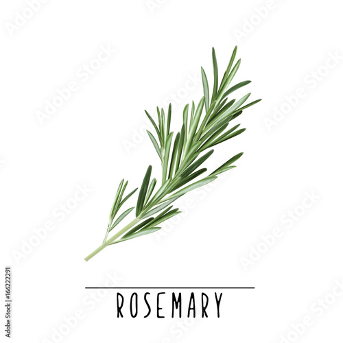 Fotografie, Obraz  Rosemary herb and spice vector illustration. Rosemary branch