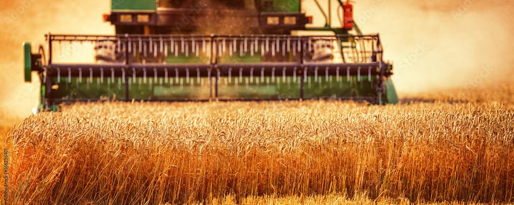 Fototapety, obrazy: Harvesting Wheat