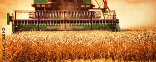 Fotografie, Obraz  Harvesting Wheat