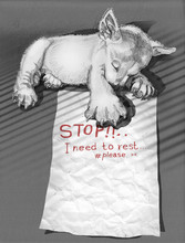 Puppies Sleeping And Note To F...