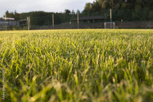 Fotografie, Obraz  Soccer Field Goal Green Grass Outdoor Sunset.