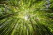 Sonne leuchtet durch Baumkronen