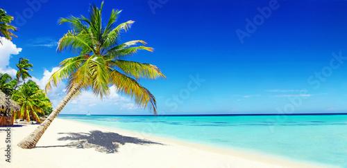 Poster Palmier Schöner Strand im Paradies