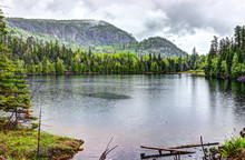 Lake Water Landscape By Forest...