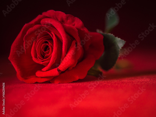 click for Wall Decals price · Low key of Valentines Day concept-red rose with red background.