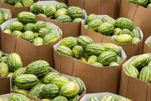 Ripe Watermelons Packed In Cardboard Boxes For Delivery To The Store.