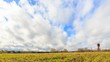 Young grass on a background of clouds in spring. Slider, HDR, Time Lapse